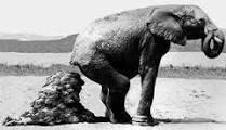 merdaDIelefante