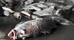 strage-di-pesci