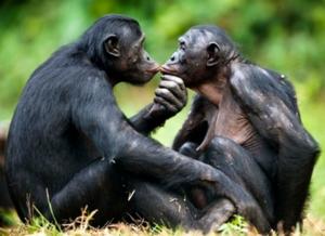 bonobo-empatia-famiglia-lasantafuriosa