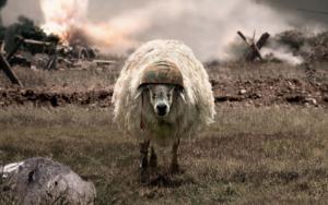 pecore-in-guerra