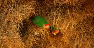 uccelli-tessitori-colonie-condominio-vicini-di-casa-lasantafuriosa