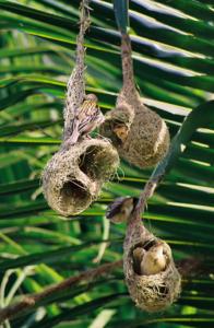 uccelli-tessitori-societa-animali-rajeev-b-rawlife-lasantafuriosa